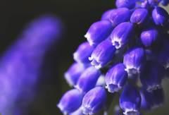 春を歌おうドレミファソ♪