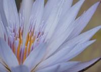 SONY ILCE-6000で撮影した(しっとりとした美)の写真(画像)