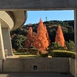 秋を感じる公園 2