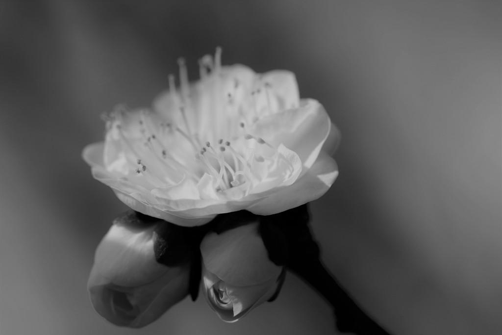春呼ぶ花 Ⅱ