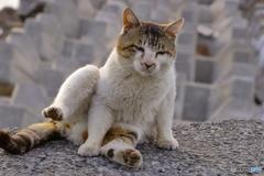 野良猫の気怠い一日の始まり
