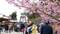 2017年2月河津桜祭り_6