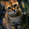 またのお越しをお待ちしてますニャ ヒョウ猫の森ー嵐山ー 最終回