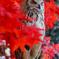 フクロウの森ー嵐山ー 03