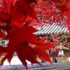 清水寺(  せいすいじ )