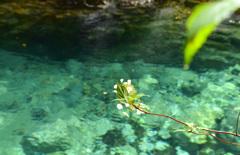 水中花のように…