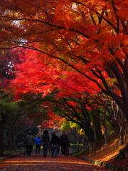 紅葉の光の下