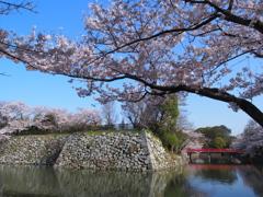 姫路城 桜4