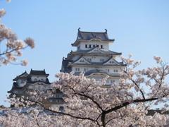 姫路城 桜3