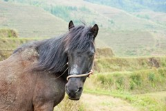 棚田の馬~中国 Horse on rice terrace