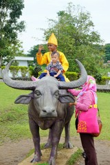 民俗のシンボル水牛の背にて~インドネシア With Water buffalo