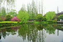 曲院風荷~中国 Curved Yard & Lotus Pool in smmr