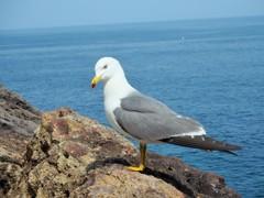 2018/6/12 米朝首脳会談始まる~韓国 Sea Gull ,Korea