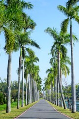 君や知る椰子の葉のそよぎ~台湾 Palm trees