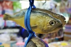 干された恨み~韓国 Hanging yellow fish