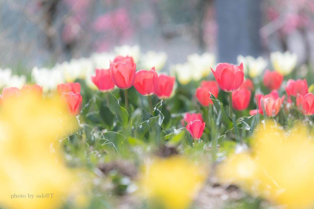 近くの花壇