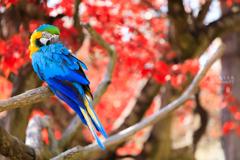 見返り美鳥