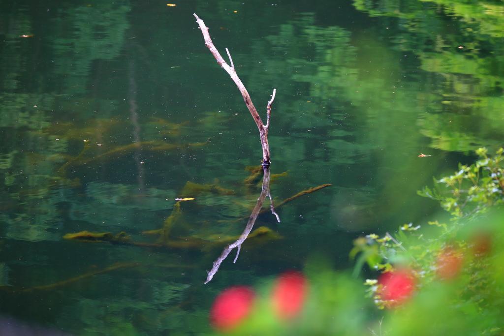 水中の枯れ枝