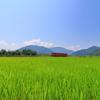 夏の田園景
