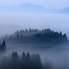 春の霧に包まれて