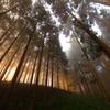朝日射す森