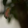 秋は木の葉の舞とともに