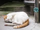 銀座の街角、甘え猫