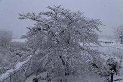 まさかの積雪!
