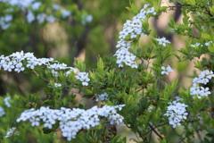 花見山の木々#4