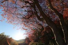 花見山の木々#1