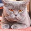 猫カフェ3#11