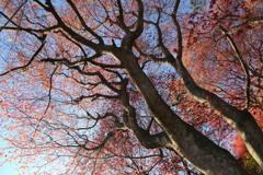花見山の木々#2