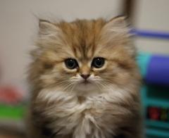 家猫新入り!!
