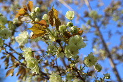 花見山の木々#3