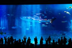 光を浴びるサメ