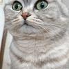 猫の日なの?!