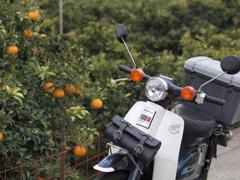 カブと柑橘