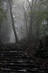 阿弥陀寺への参道