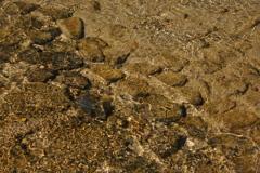 禊川の水と川底
