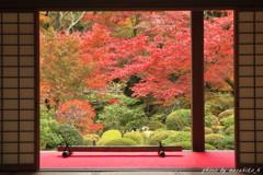 明壽院の秋~血染め
