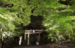 神あかり2018~青紅葉の参道②