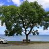 #あのベンチ~湖岸ドライブ