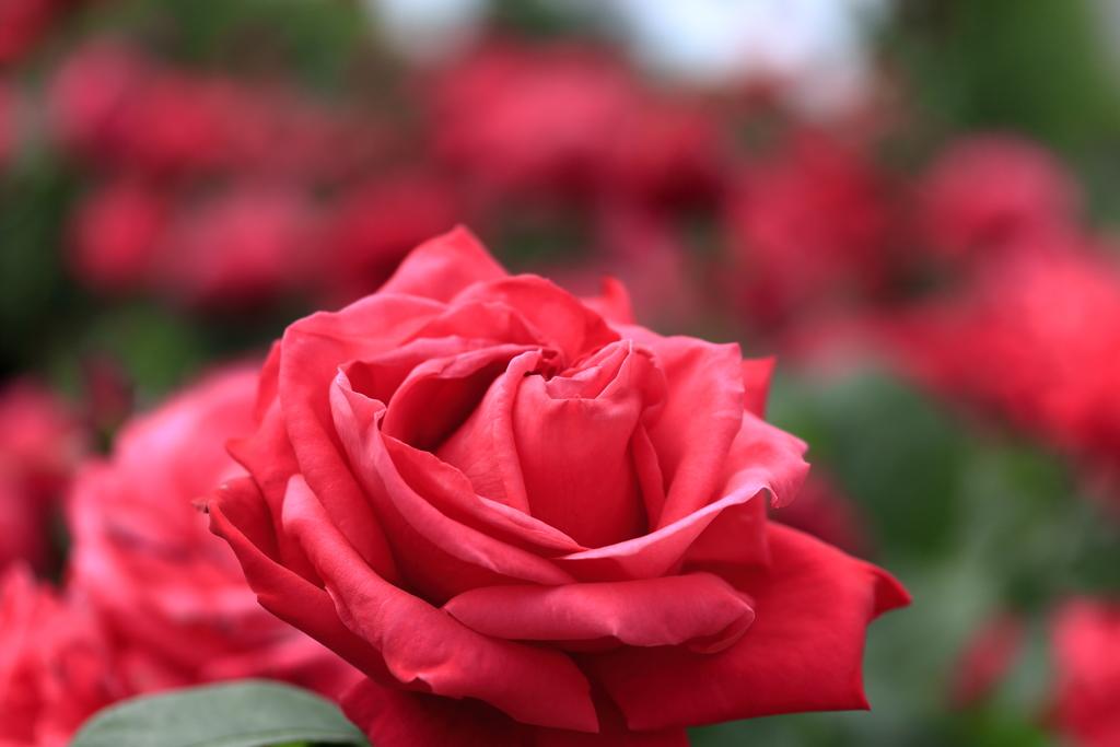THE BLUE HEARTS~情熱の薔薇