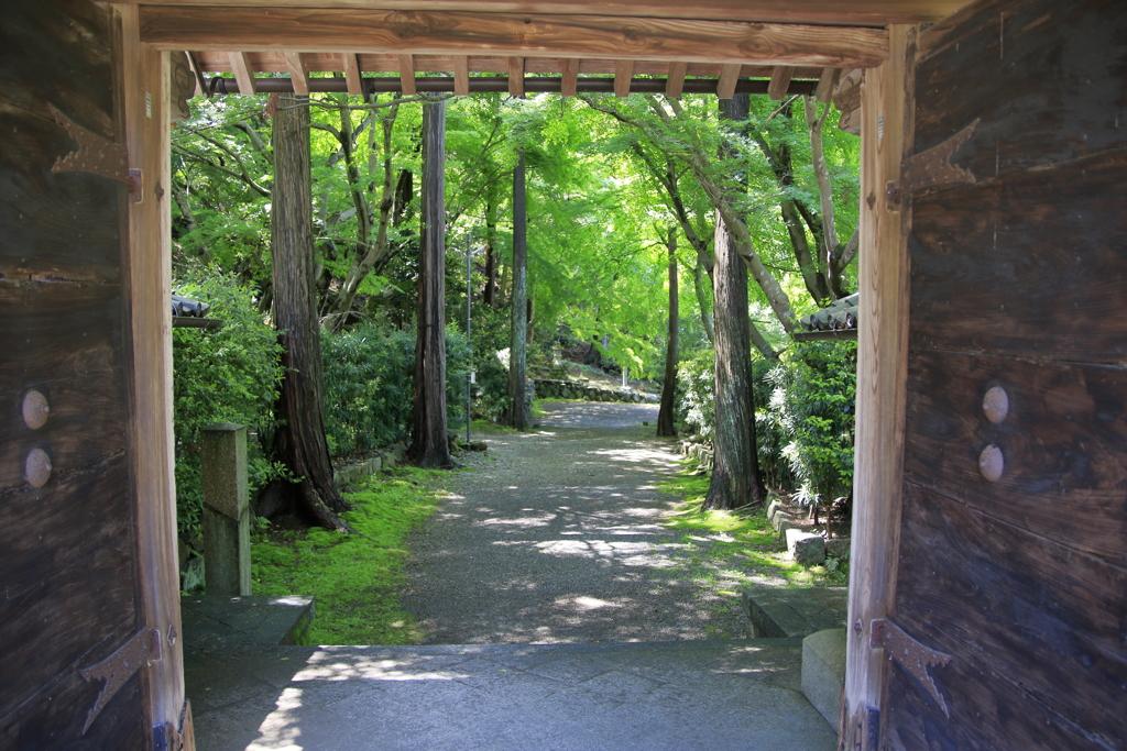 新緑の山寺参道