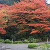名勝庭園の秋(蔵出し)