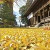 黄金の絨毯
