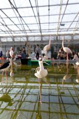 掛川花鳥園 ⁇シギ⁇