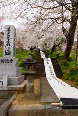 興徳寺 桜