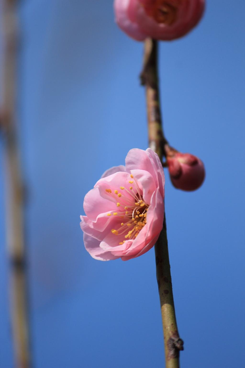 春よ来いⅡ(^^♪