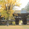お寺の銀杏(^^)